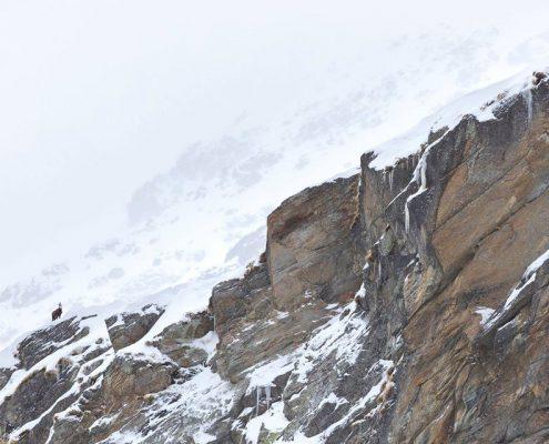 Gran Paradiso Trekking